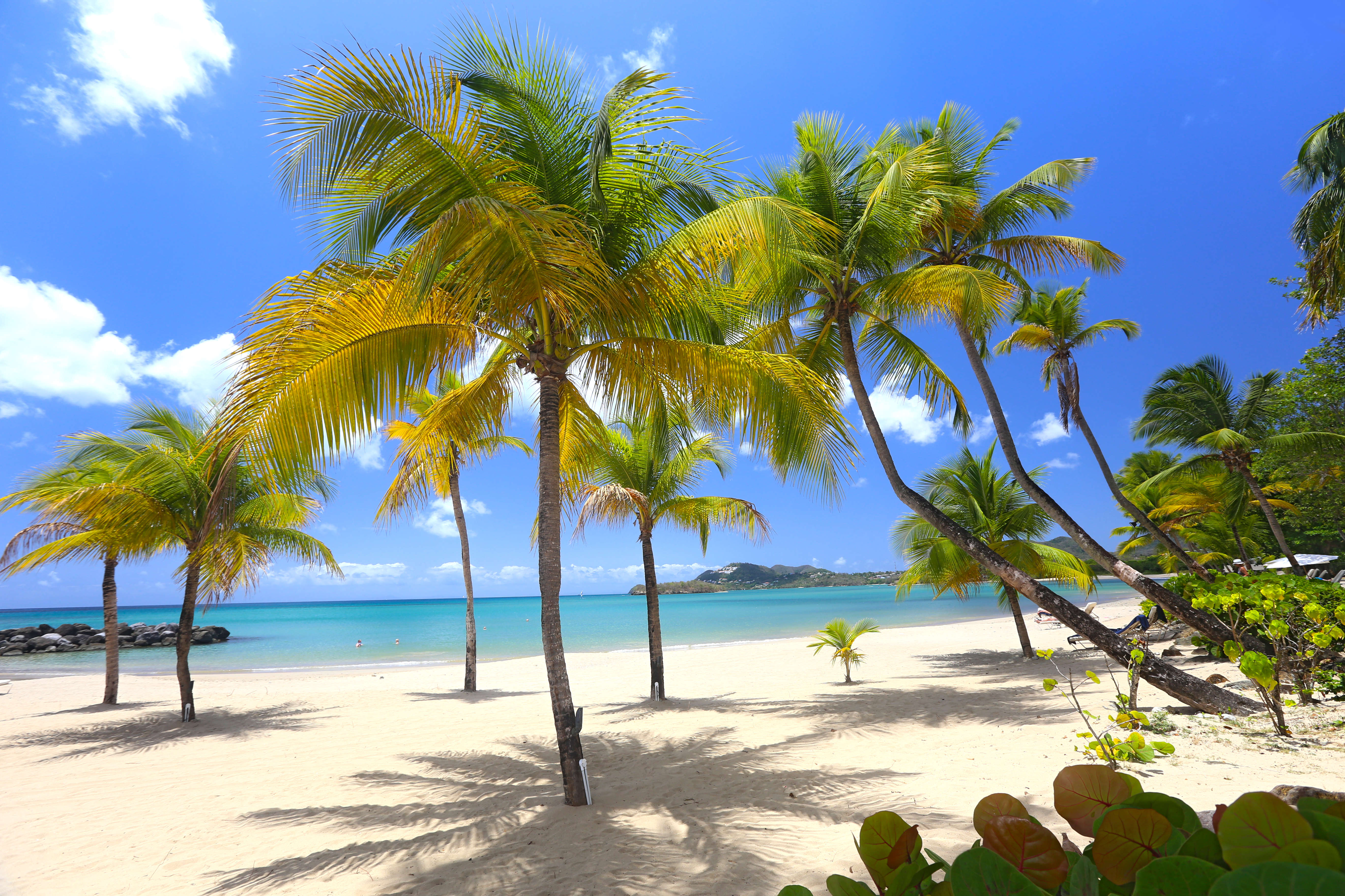 Beach_with_palm_tree