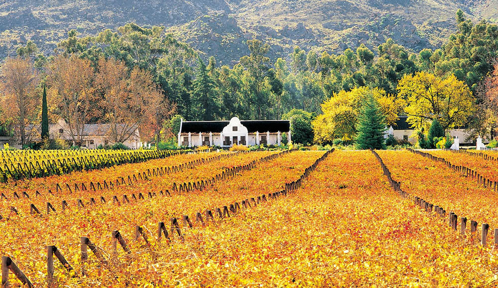 Wine_Farm_South_Africa