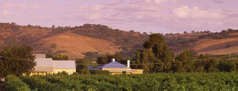 Adelaide_Vineyard